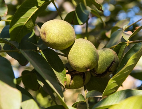 California Walnuts show continued positive trend